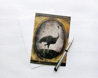 Greeting Card - Ostrich Art Ostrich Stationery 5x7 Photo Card Photo Greeting Card Bird Artwork Animal Photography - Sir Chandler