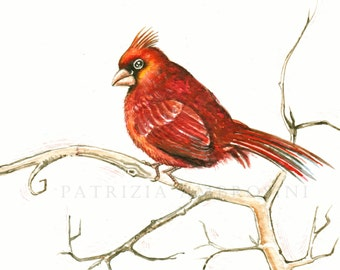 9x7 - Original Watercolour. red cardinal.No.10. NOT A PRINT ..Original Painting