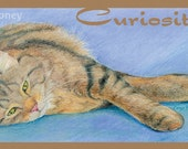 """Bookmark - Playful MaineCoon cat sprawled on the floor with an Arnold Edinborough quote - """"Sprawl"""" - GREAT gift for a reader or cat lover"""