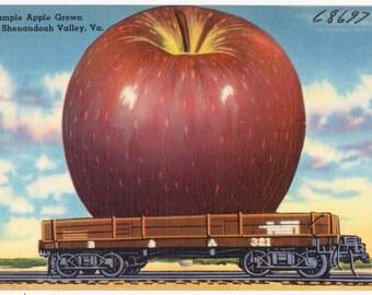 2,300 Vintage Postcard Collection of Virginia & Texas (1930's-1940's) {Hi Res, jpg 300dpi} on DVD