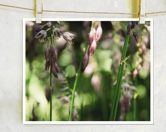 Into the Lilac -  fine art film photography, botanical photography, lilac flower photography, purple flower photography