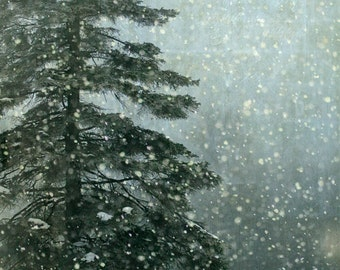 winter snow fir pine tree landscape photography fine art photograph home decor office decor