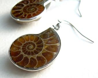 Piccoli orecchini dell'Ammonite, scienza Geek gioielli, Fossil regali per geologi