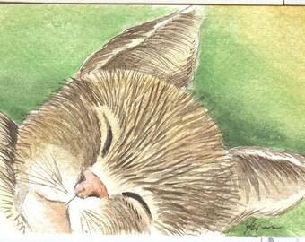 ACEO Original Watercolor  Sleepy Head