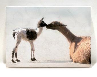 Animal Art - Nursery Art - Llama Baby 5x7 Canvas Print on Art Block - Baby Breath -  Photograph - Kids Room Wall Decor