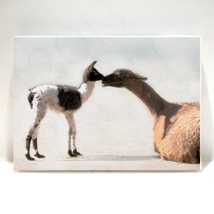 Animal Art Nursery Art Llama Baby 5x7 Canvas Print On Art