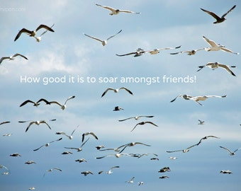 Soar With Friends -- set of 3 greeting cards -- 5x7 -- with envelope -- inside blank