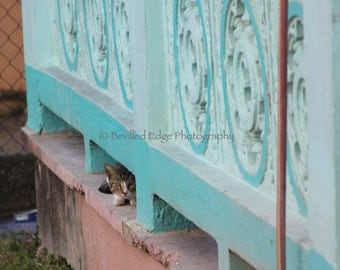 11x14 print of Stray Cat in Vieques Island, Puerto Rico