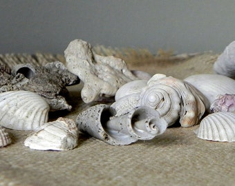 Vintage seashells and other beach creatures tumbled distressed - great bowl filler - No. 1 - 24 pieces