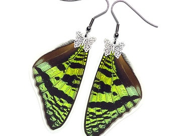 Real Butterfly Wing Earrings (Urania Ripheus FW - E073)