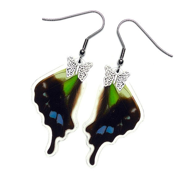 Real Butterfly Wing Earrings (Graphium Weiskei Hindwing - E072)