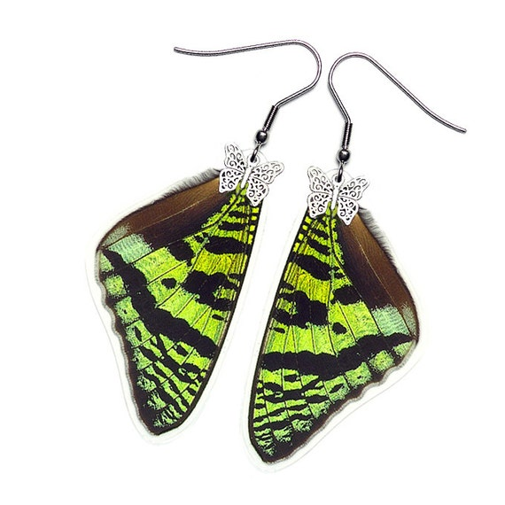 Real Butterfly Wing Earrings (Urania Ripheus FW - E073) - Buy 2 Get 1 Free