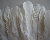 GOOSE COQUILLE FEATHERS  Pearl White, Eggshell  /   698