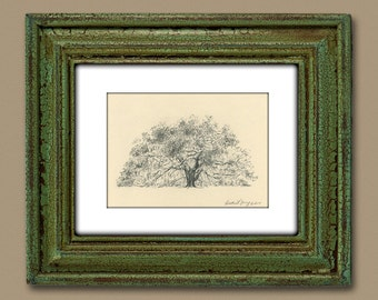 Majestic Live Oak Tree Savannah Pen and Ink Drawing