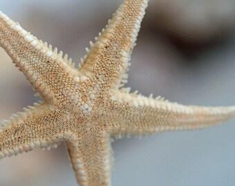 Digital Download - Starfish - Photo Instant JPEG PDF Files
