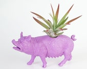 Air Plant Pig Planter, College Dorm Geekery, Plants and Edibles, Plant Pot, Purple Farm Animal, Tillandsia Plant