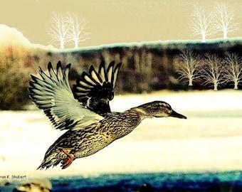 Duck Art, Wildlife Home Decor, Abstract Realism, Flying Bird, Woodland Animal, Earth Tones, Cabin Wall Hanging, 8 x 10, Giclee Print