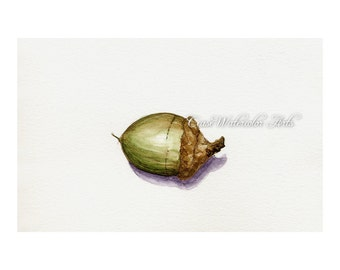 1 Little acorn, watercolor 5x7  giclee print