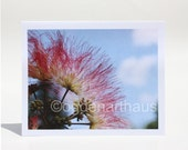Eight Note Cards Mimosa Blossom Pink Flower Photography Cards - Stationery - Fine Art Photography Cards Blank
