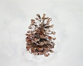 Watercolor Pine Cone Print- 7x10- Watercolor Painting- Brown Cone, White Snow- Rustic, Winter, Fall- FIne Art- Botanic Illustration