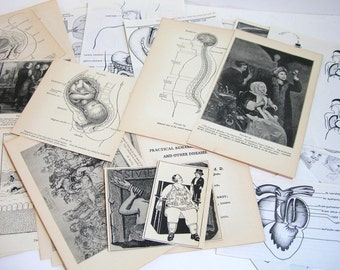 Vintage Ephemera Human Biology Reproduction Birth For Scrapbooking Or Collage