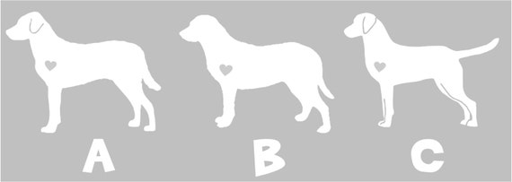 Chesapeake Bay Retriever Jacksonville Fl Chesapeake Bay Retriev...