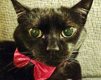 Red Bow Tie Collar for Cats or Small Dogs