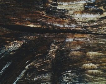 Distressed Wood Surface Weathered Texture Abstract Fine Art Photo Print - Gallery Quality Home Decor in Various Sizes and Mounting Options