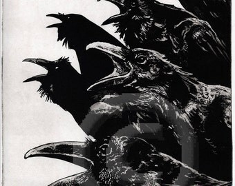 Raven artwork , Raven, crow, Etching 2013, 8 inch x 10 inch