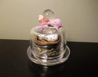 Petite glass cloche with nest and eggs
