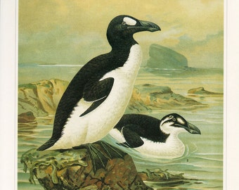 CLEARANCE Vintage Book Plate Penguins