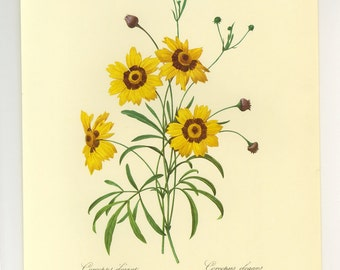 Redoute Botanical Corcopsis Yellow Print Book Plate SALE Buy 3, get 1 free