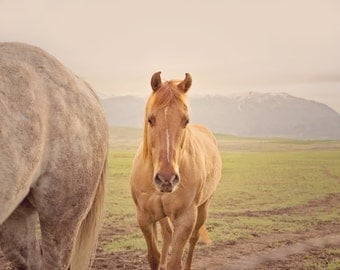 Modern Horse Photograph in Color, Western Photography