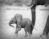 SAFARI BABY ANIMALS, Set of 4 Black & White Photos,  Elephant, Lion, Cheetah, Giraffe, African Wildlife Photography, Safari Nursery Wall Art