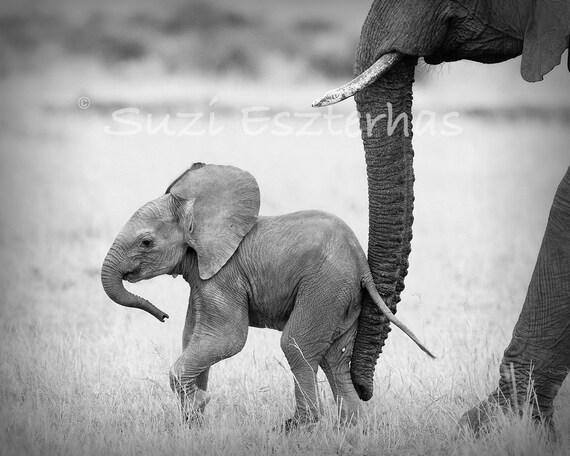SAFARI BABY ANIMALS, Set of 4 Black & White Photos,  Elephant, Lion, Cheetah, Giraffe, African Wildlife Photography, Safari Nursery Wall Art
