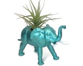 Elephant planter comes with almost care free air plant.