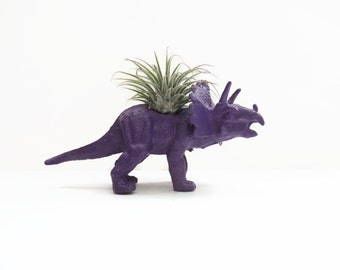 Tommy the triceratops. Small eggplant dinosaur planter with mini air plant.