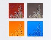 Color Abstract Bird Tree Quartet Set Wall Art Home Decor Fine Art Photography