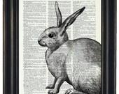 BOGO SALE Rabbit Dictionary Art Print Rabbit  Wall Decor Dictionary Print Book Page Print