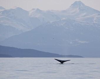 Alaska Humpback Whale  (multiple sizes available)