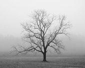 black and white photography, trees, tree, tree photography, lone tree, fog, foggy, Velvet Sunrise