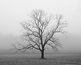 black and white photography, trees, tree, tree photography, lone tree, fog, foggy, Velvet Sunrise
