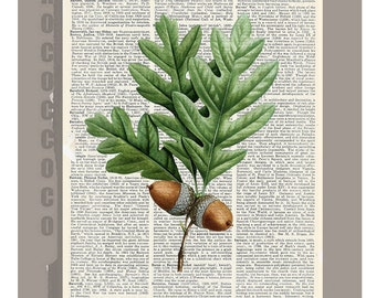 Hazelnut Branch - Botanical art  Artwork on a page from vintage Dictionary -Upcycled Book Print