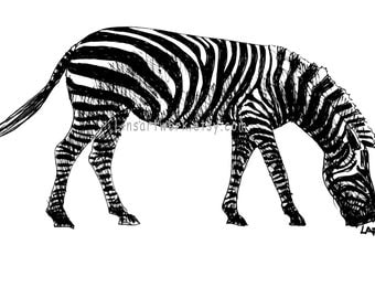 Zebra matted pen and ink. Original drawing or Limited Edition Print-Zebra grazing. black archival pen and ink.
