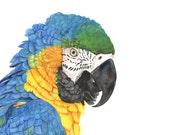 Macaw Watercolor Painting #2 2014 - Bird Art - Print of watercolor painting A4 Size wall art print - bird art print