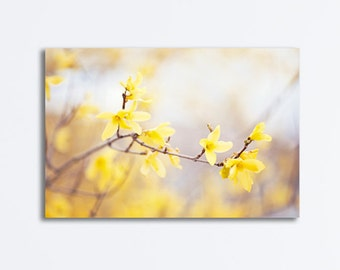 Yellow Flower Wall Art forsythia photography yellow nursery wall art flower floral