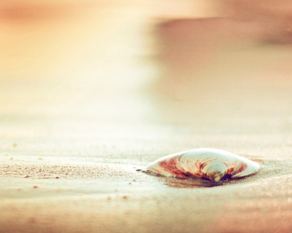 "Beach Photography - seashell gold print sea shell wall art cream yellow orange coastal photo brown - 11x14, 8x10 Photograph, ""Washed Ashore"""