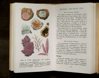 Sea and Seashore vintage book, The Observer's Book of Sea and Seashore by I. O. Evans