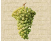 White green grapes Instant digital download graphic image for iron on fabric transfer burlap papercraft tote pillows decoupage Item No 430