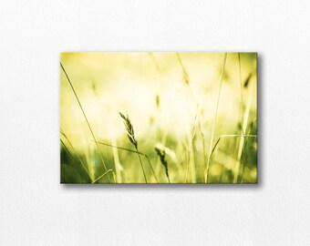 nature photography canvas print nature  canvas art 12x12 24x36 fine art photography botanical canvas wrap grasses canvas art lemon lime